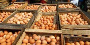 Peluang Menjadi Pebisnis Agen Telur Ayam